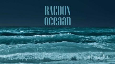 Oceaan – Racoon